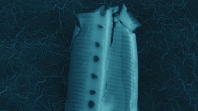 image_1393e-alien-diatom