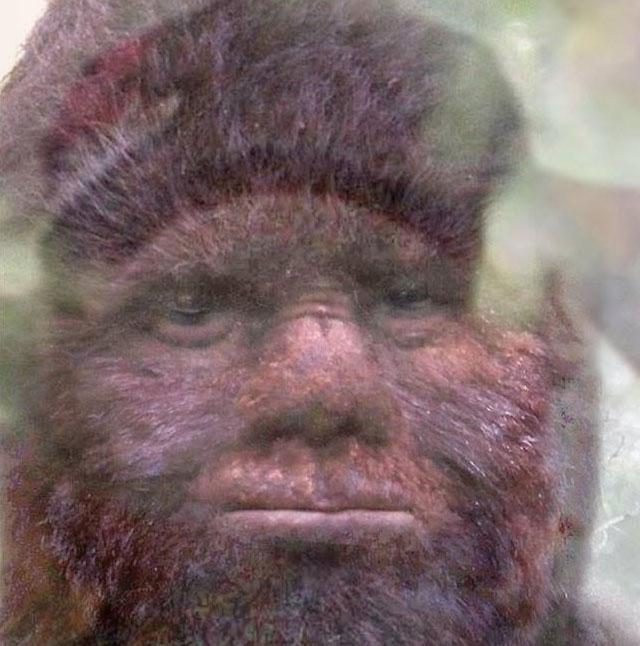 survivorman bigfoot alberta guide video