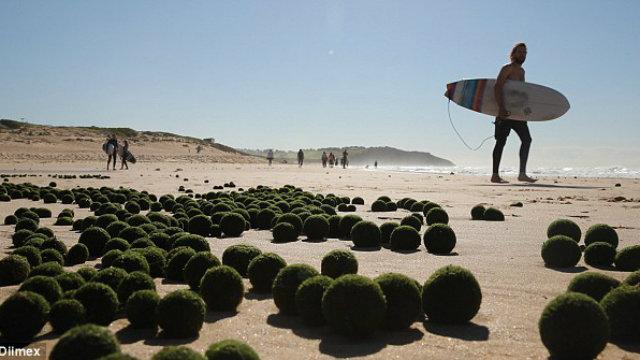 algaeballs