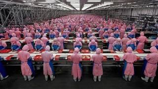 human-farms